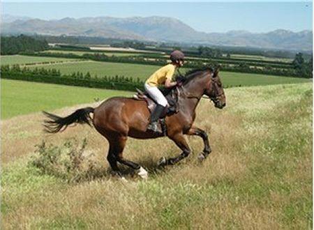 Ballycarnew-Riding-Centre-1277825873-3.jpg
