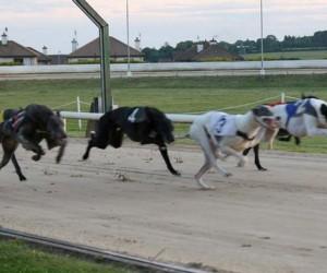 Greyhounds_226636k